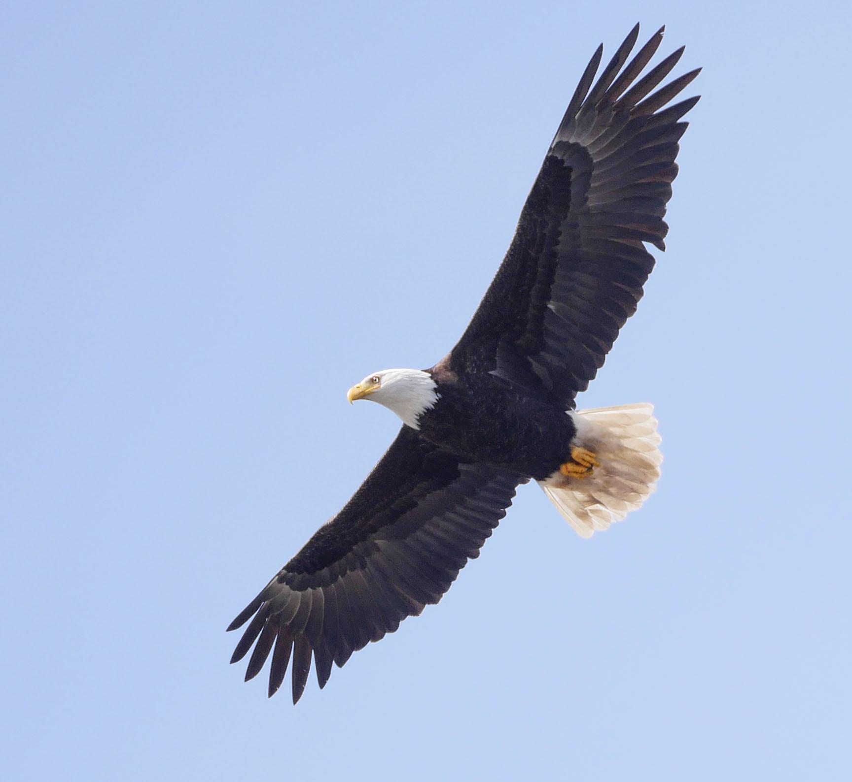EaglePL100-400