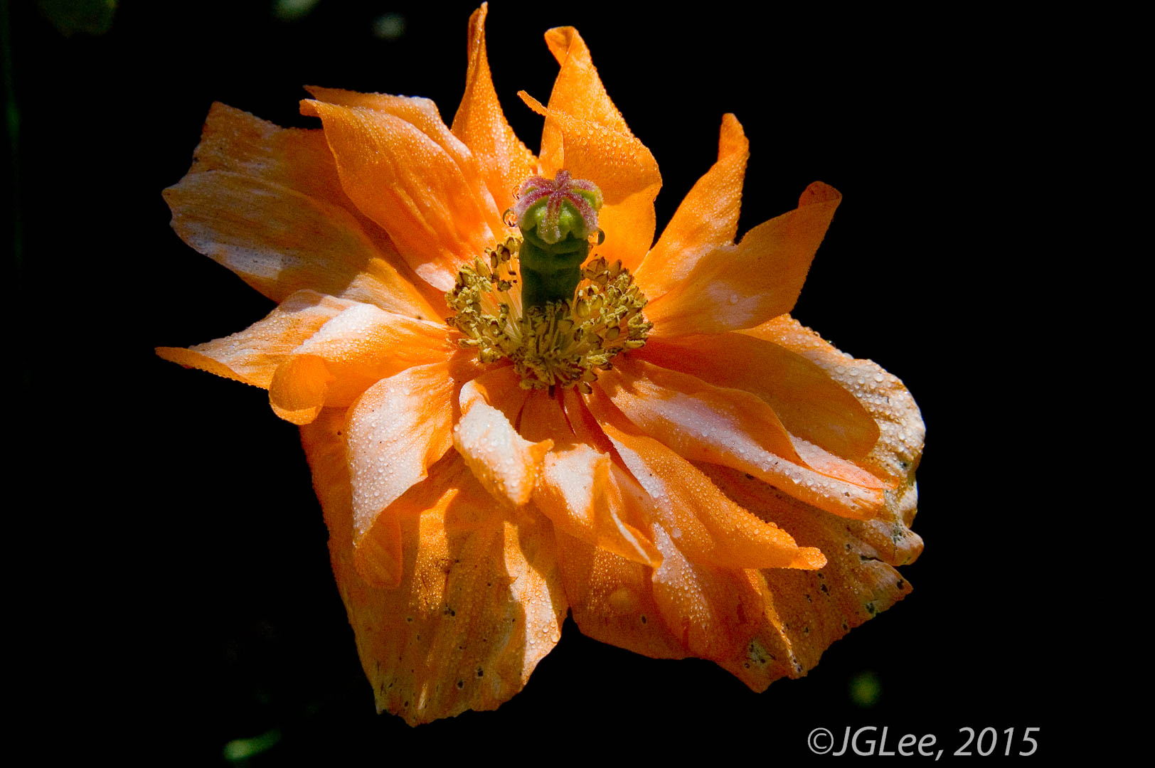 Orange in Light