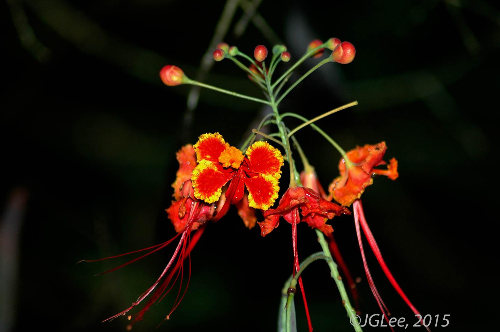 Costa Rica Flower 2