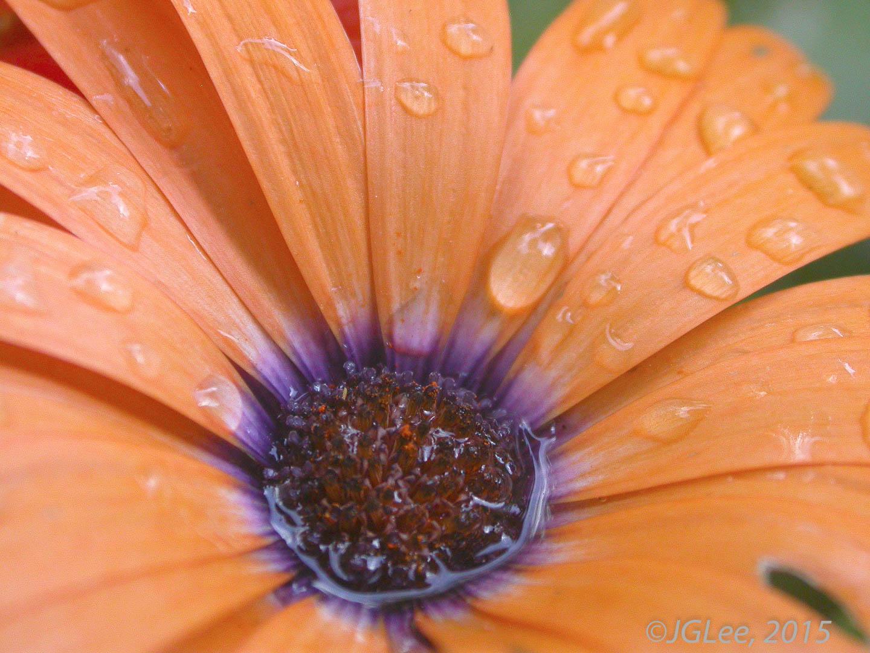 Rained On
