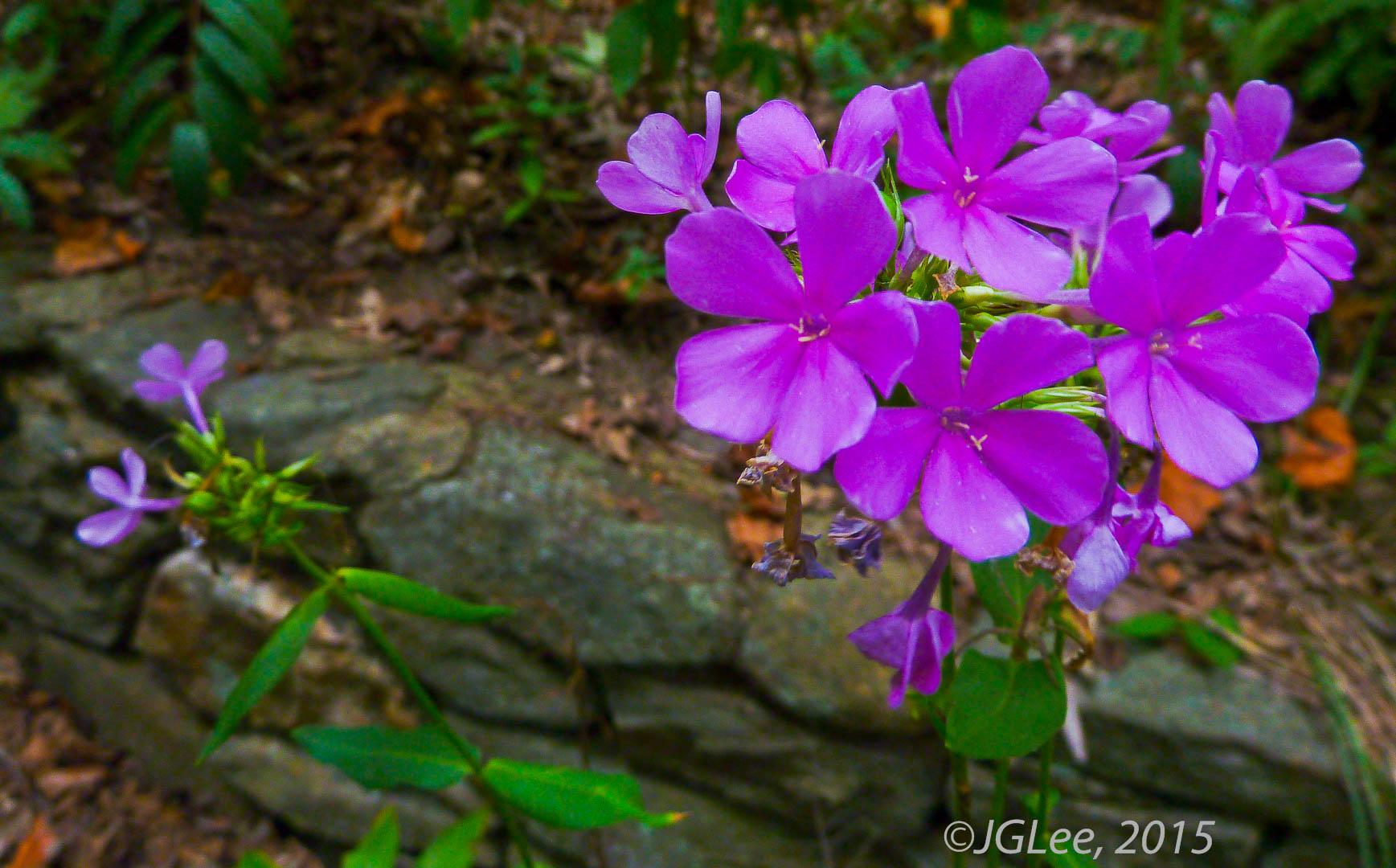 Violet In Color