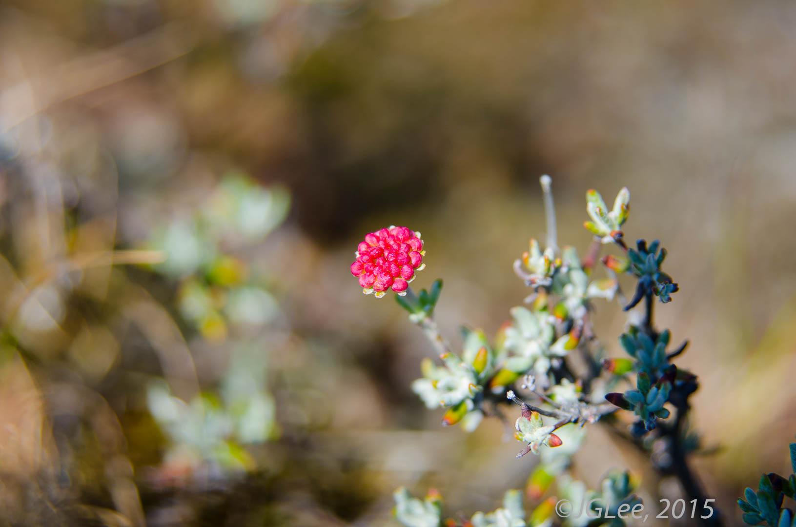 Wildflower III