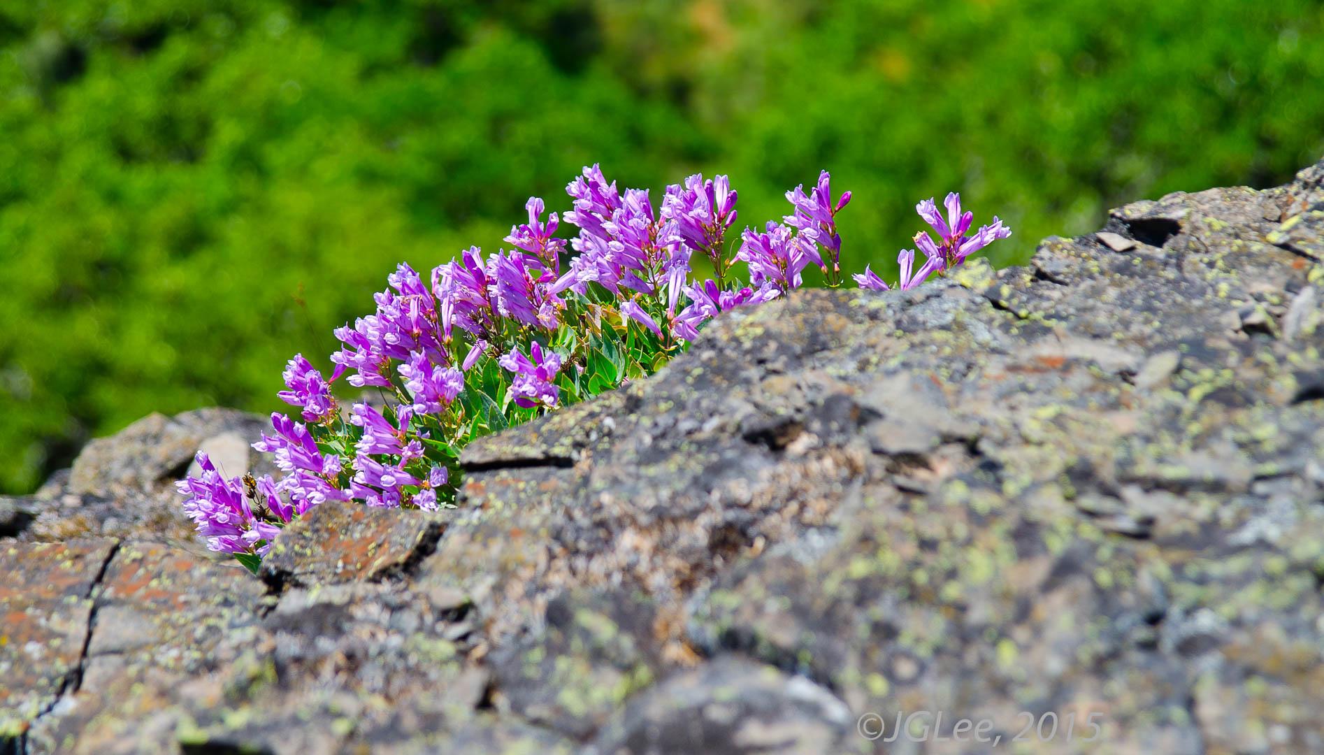 Wild Flower IX