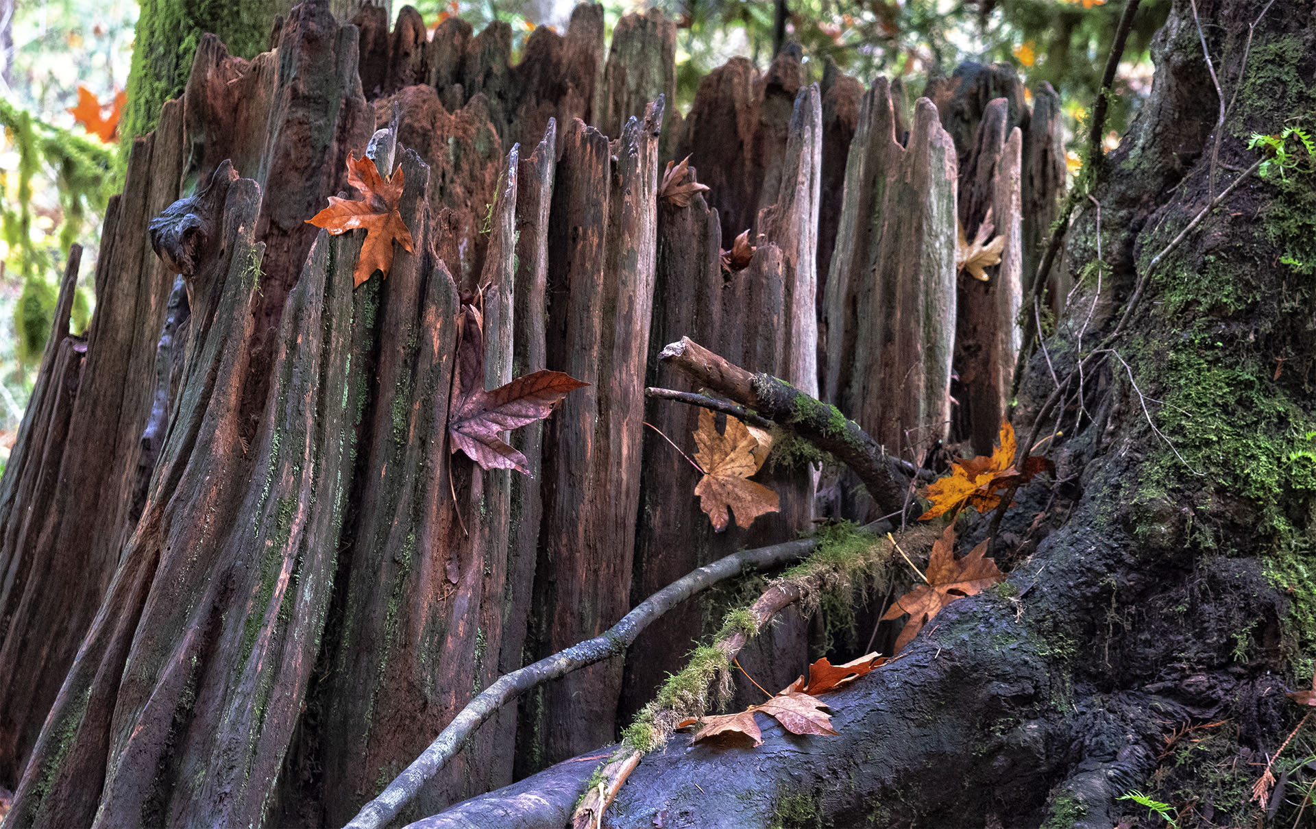 Stump110818