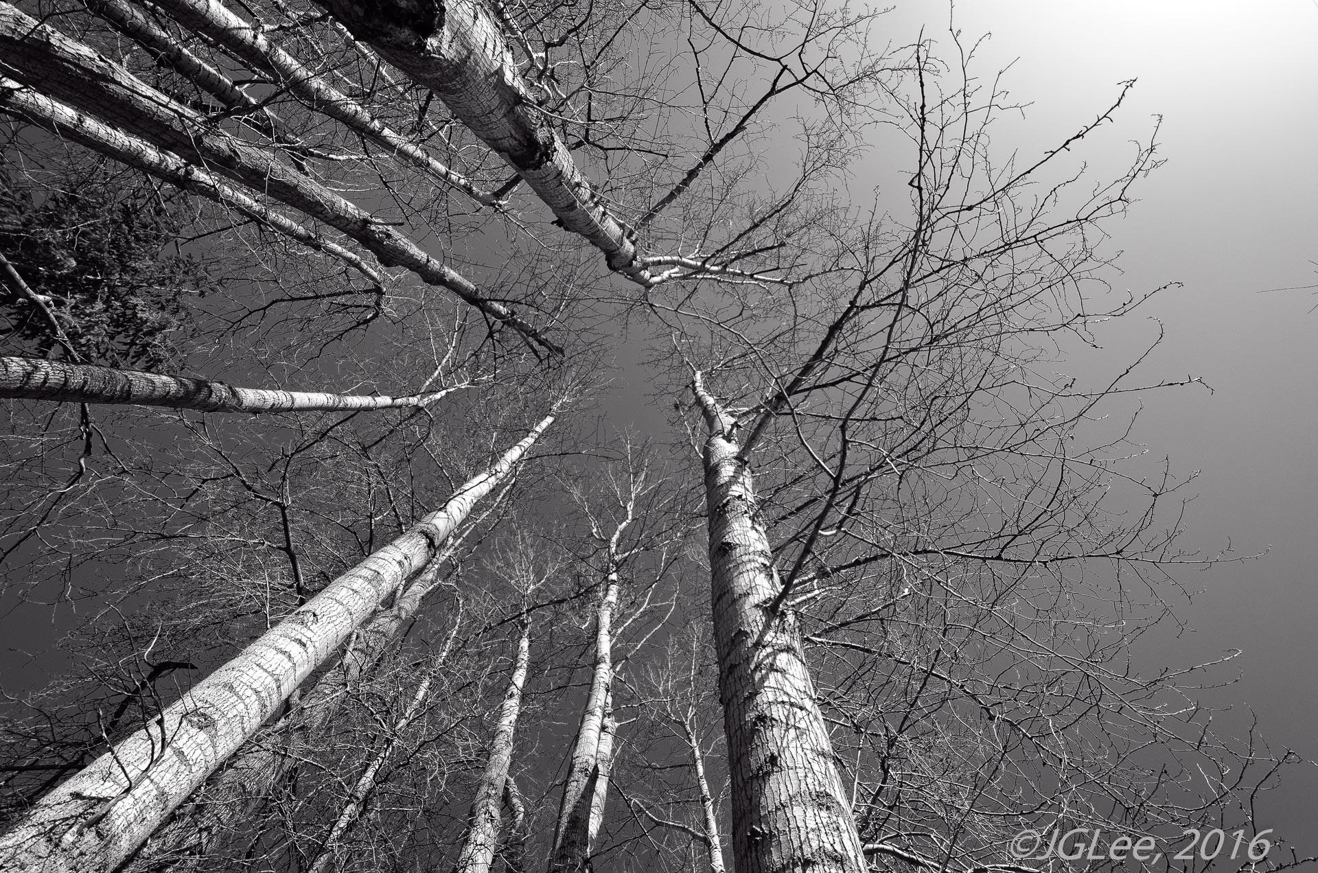Trees-Edit