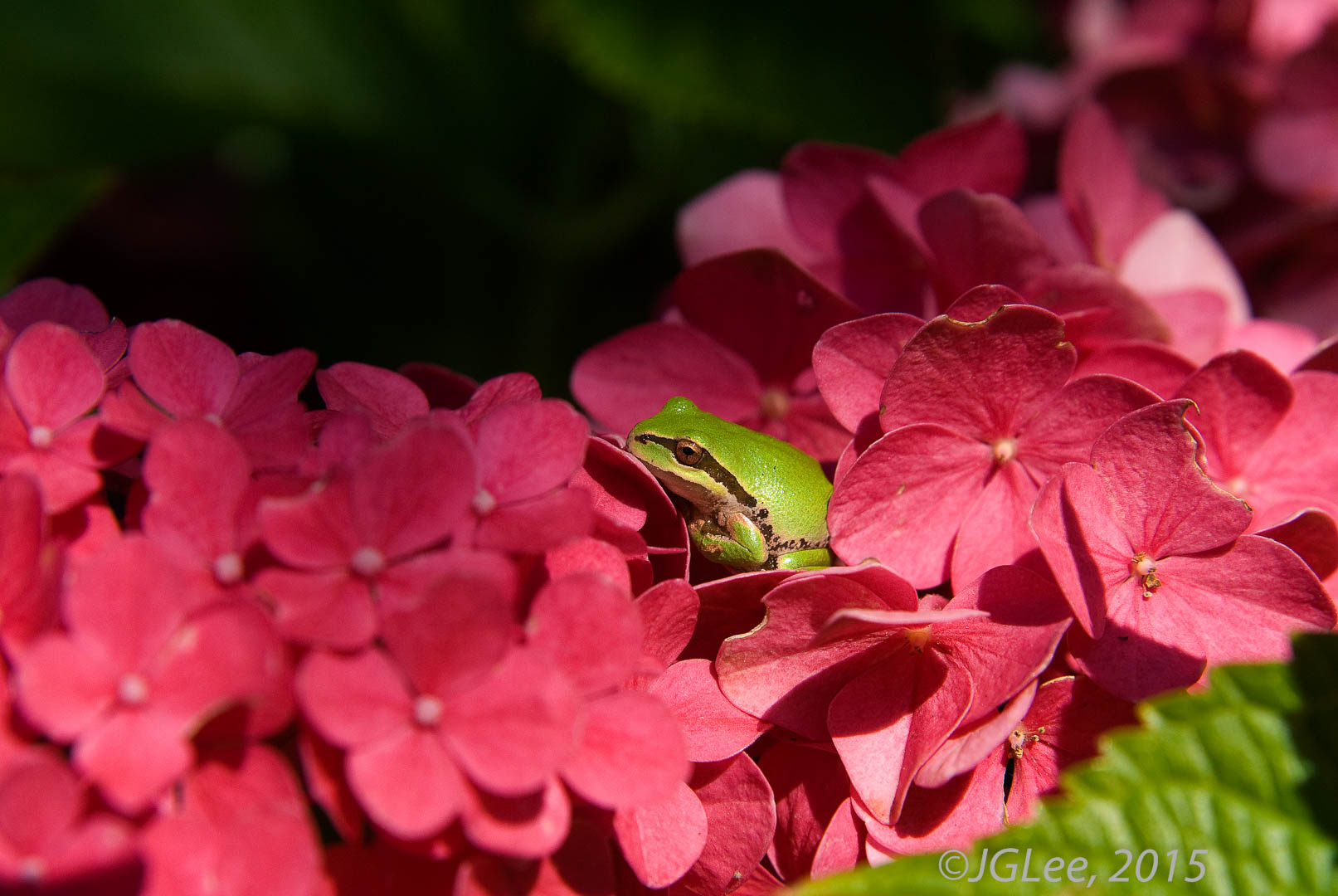 Green Frog Red Flowers