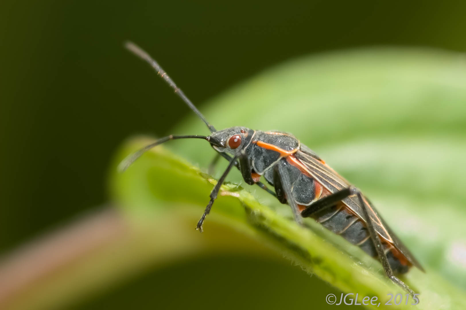 Bug on a leaf