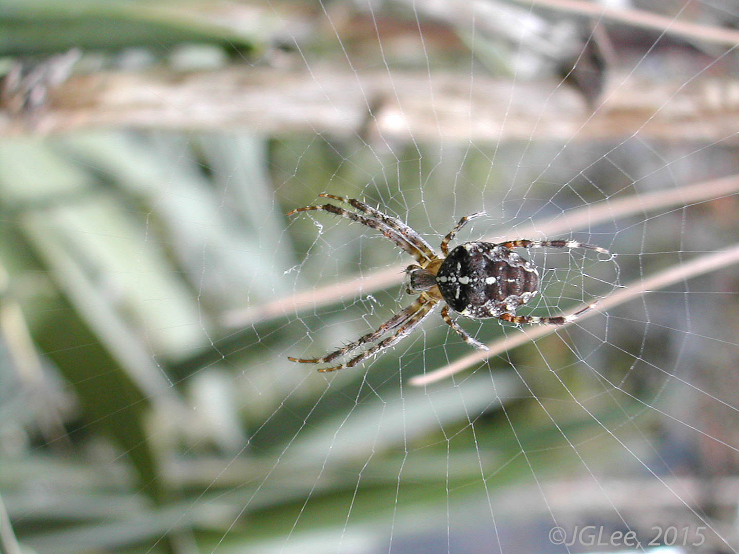 Spider on a Web I